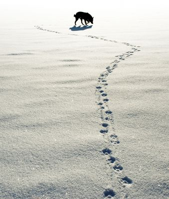 Starting Your Dog in Tracking