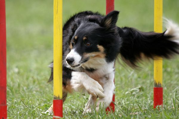 An Introduction to Agility